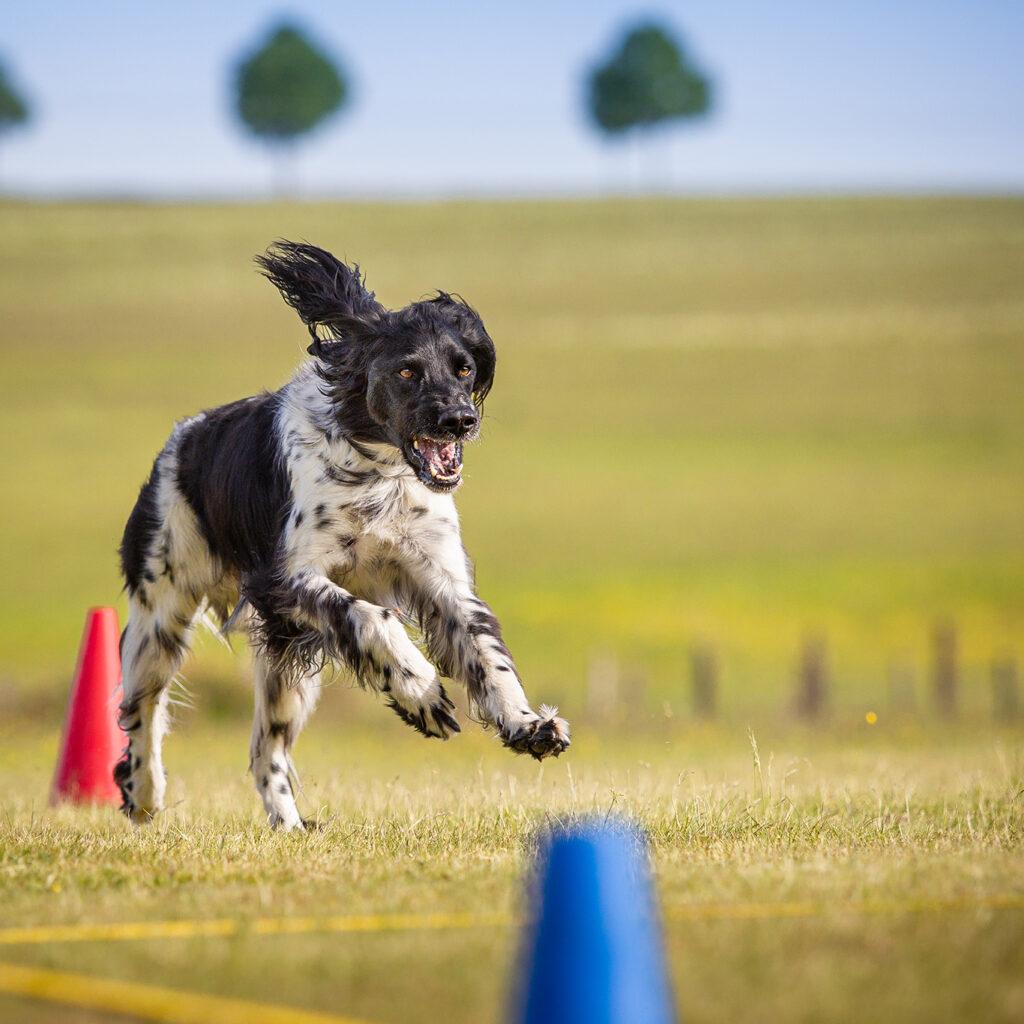 Hundesportverein-Hof_2020-06-02-(15-von-288)