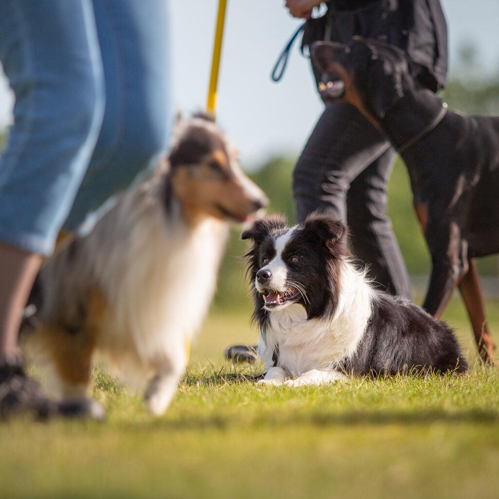 Hundesportverein-Hof_2020-06-02-(177-von-288q)