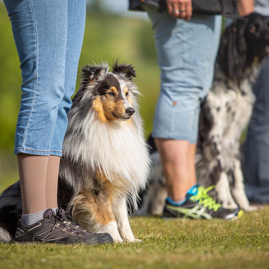 Hundesportverein-Hof_2020-06-02-(90-von-288)